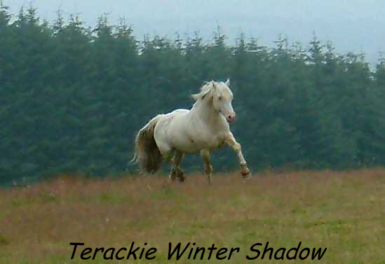 Terackie Winter Shadow