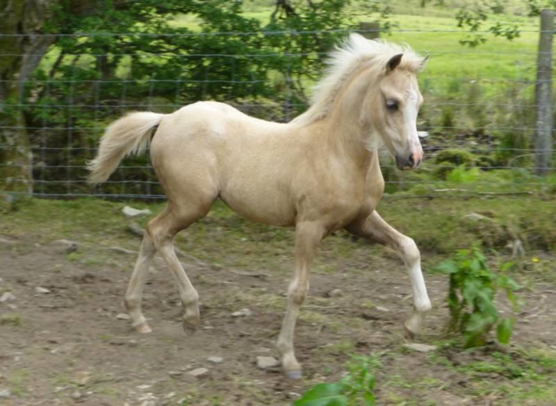 palomino foal - photo #23